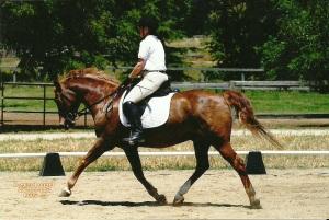 PEC 5-22-04 Indy Trot flip