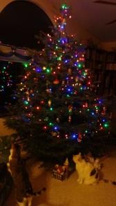 Tree 2013d-s